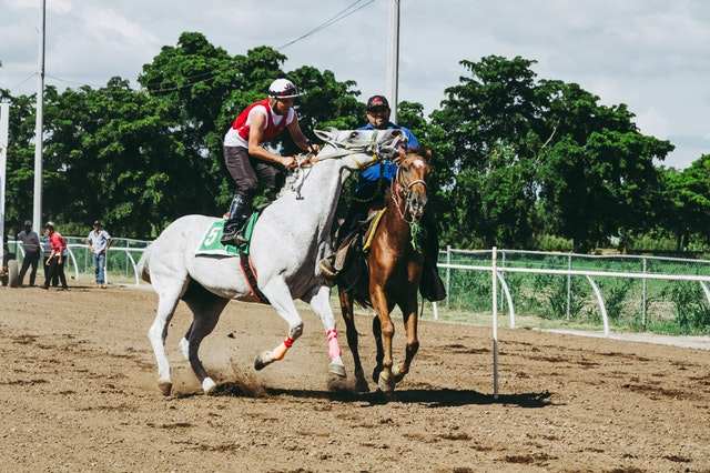 two-white-and-brown-running-horses-1462345